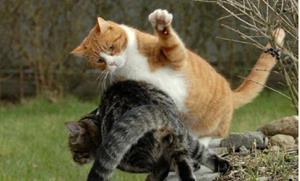 Дворовые коты