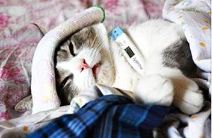 Заболевший кот