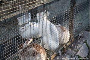 Зайцы в зоопарке