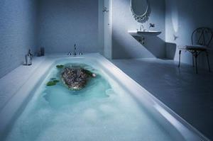Крокодил в ванной