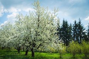 Зелёный лес с цветущими деревьями