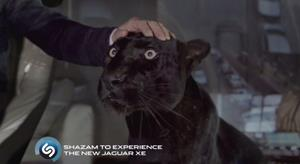 Поглаживание пантеры