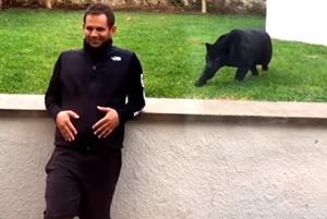 Нападение пантеры