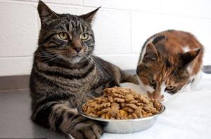 Коты в квартире