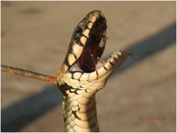 Убийство змеи