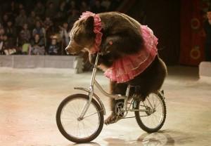 Цирковой медведь на велосипеде