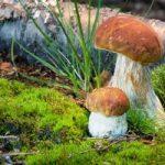 К чему мы видим грибы во время сна
