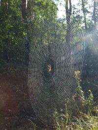 Паутина в лесу