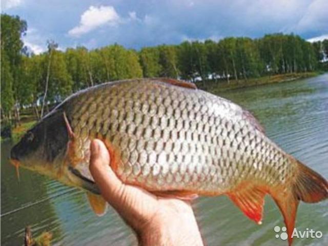 Только что пойманная рыба
