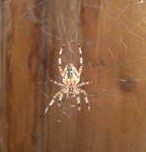 Паук сплел паутину за шкафом