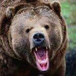 «Медведь гонится за мной во сне» — толкование сонников