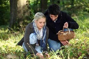 Семья собирает грибы в лесу