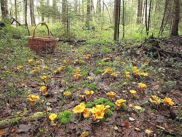 Мелкие грибы