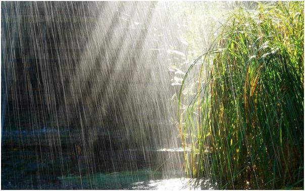 Трава и дождь