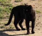 Потерянная кошка