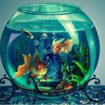 Приснился аквариум с рыбками — значение по соннику