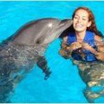 К чему по соннику женщине могут присниться дельфины