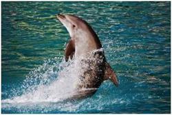 Дельфин выпрыгнул из воды