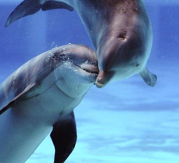 Сонник дельфин в море для девушки