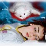 К чему по соннику снится мёртвая кошка