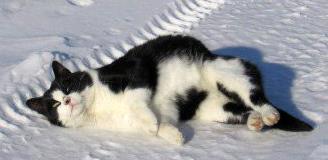 Мертвая кошка на снегу