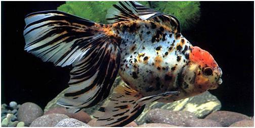 Пятнистая рыбка