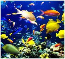 Косяк красивых рыб