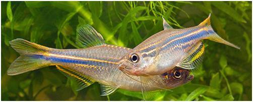 Блестящие рыбки