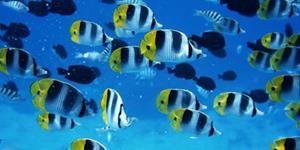 Разноцветные морские обитатели