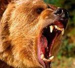 Медведь нападает во сне — значение по соннику