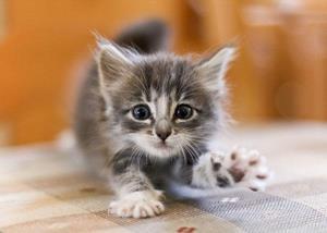 Котенок протягивает лапку