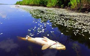 Тухлая рыба плавает в воде
