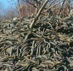 Что значит много змей во сне по соннику
