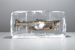 Рыба во льду