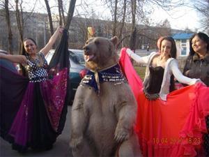 Медведь на свадьбе