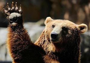 Медведь машет