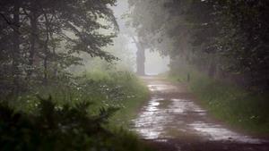 Дорога в дождь