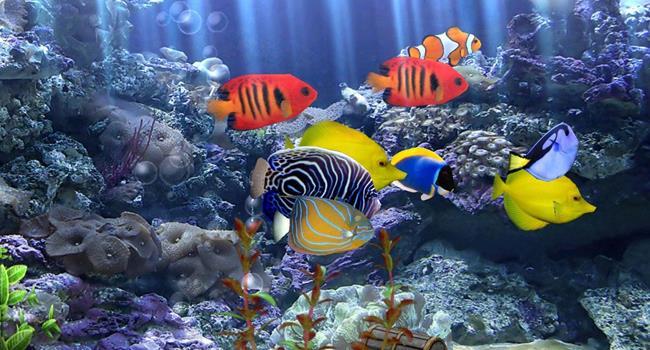 Разноцветные крупные рыбки