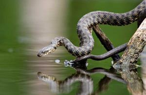 Змея над водой