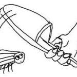 Что значит убивать тараканов во сне по соннику