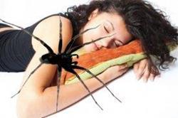 Паук во сне