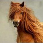 Значение сна про лошадь для женщины