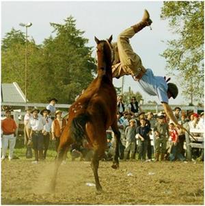 Лошадь брыкается