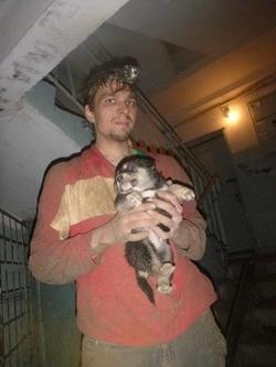 Спасти животное