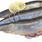 К чему по соннику снится солёная рыба