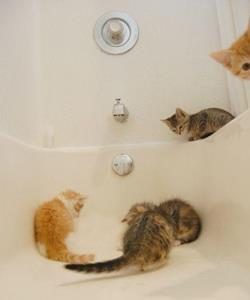 Котята в ванной