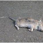 К чему могут присниться мертвые мыши
