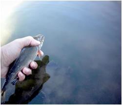 Отпускать рыбу