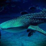 Что означает поймать большую рыбу во сне
