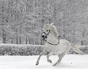 Лошадь бегает по снегу